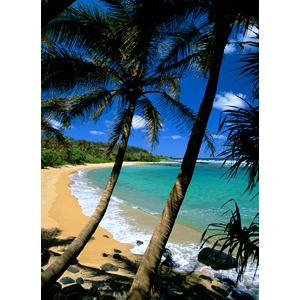 Polynesian Palms