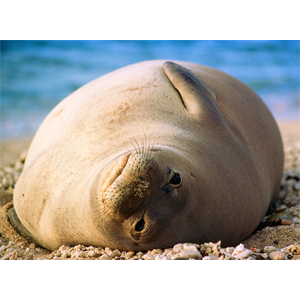 My First Monk Seal
