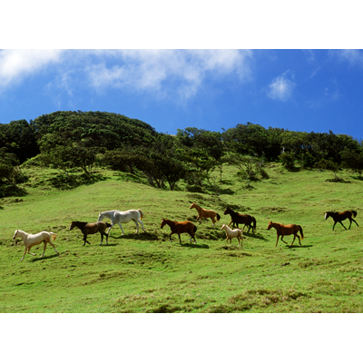 Up Country Waimea